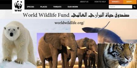 site wild world